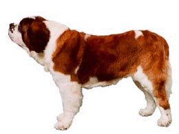 St bernard dog graphics