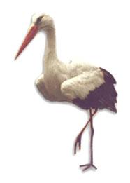 Stork Graphics