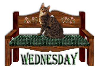 Wednesday graphics