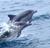 Dolphin icon graphics