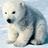 Polar bear icon graphics