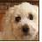 Puppy icon graphics