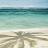 Palm tree icon graphics