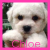 Icon graphics Name icons Chloe