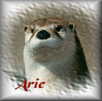 Arie name graphics