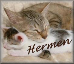 Hermen name graphics