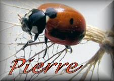 Pierre name graphics