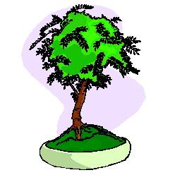 Clip Art - Clip art bonsai 433959 - 21.3KB