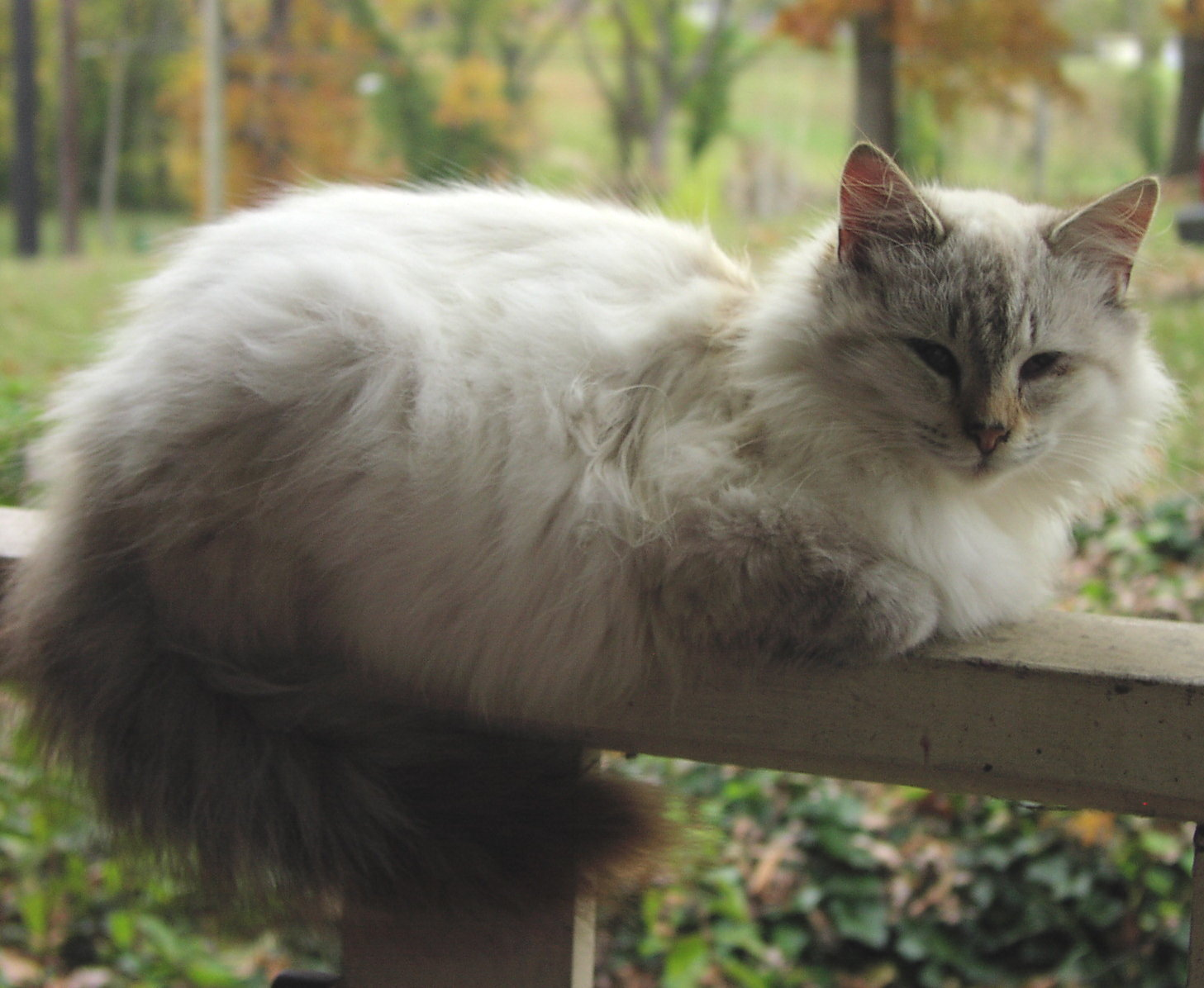 http://www.picgifs.com/wallpapers/wallpapers/cats/cat_27.jpg