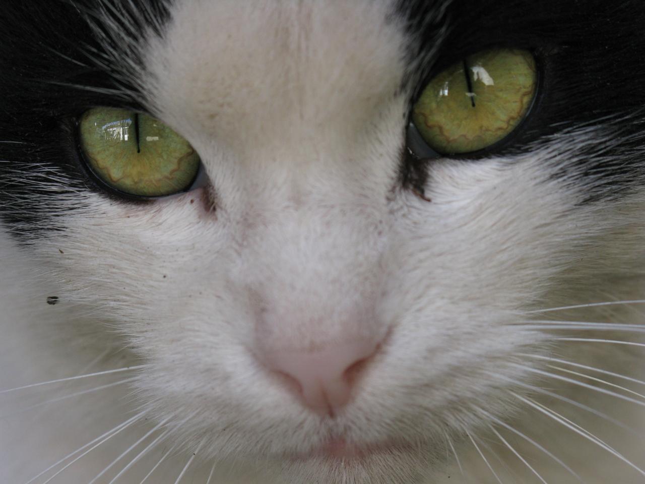 http://www.picgifs.com/wallpapers/wallpapers/cats/wallpaper_kat_animaatjes-28.jpg