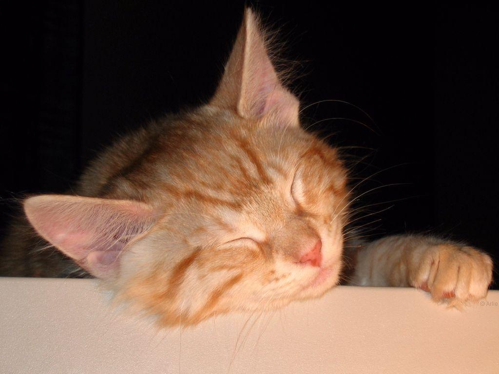 http://www.picgifs.com/wallpapers/wallpapers/cats/wallpaper_kat_animaatjes-36.jpg