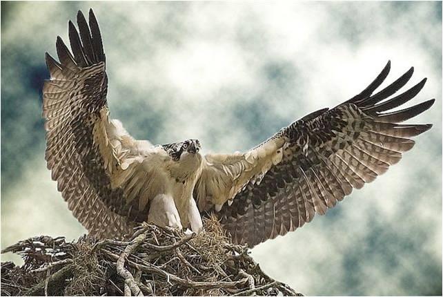 Animaatjes Roofvogels 27768 Wallpaper