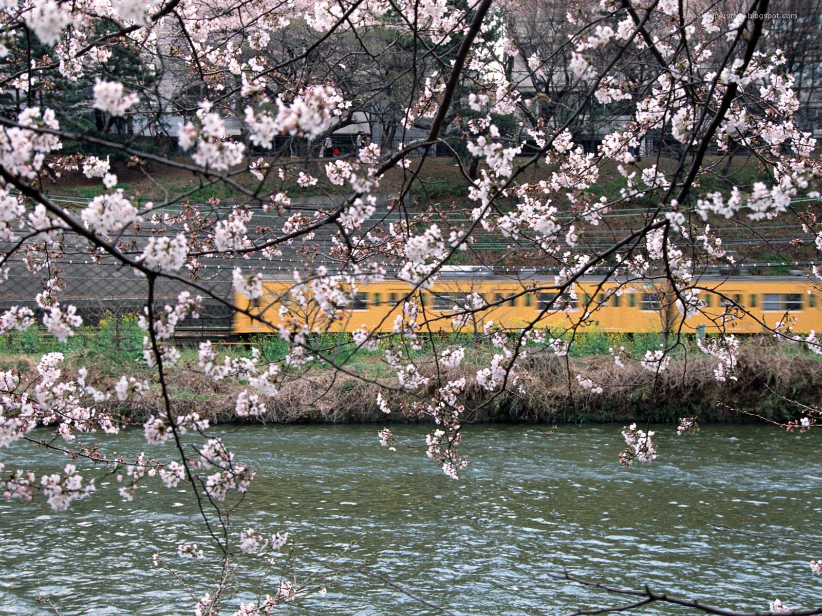 Japan wallpapers