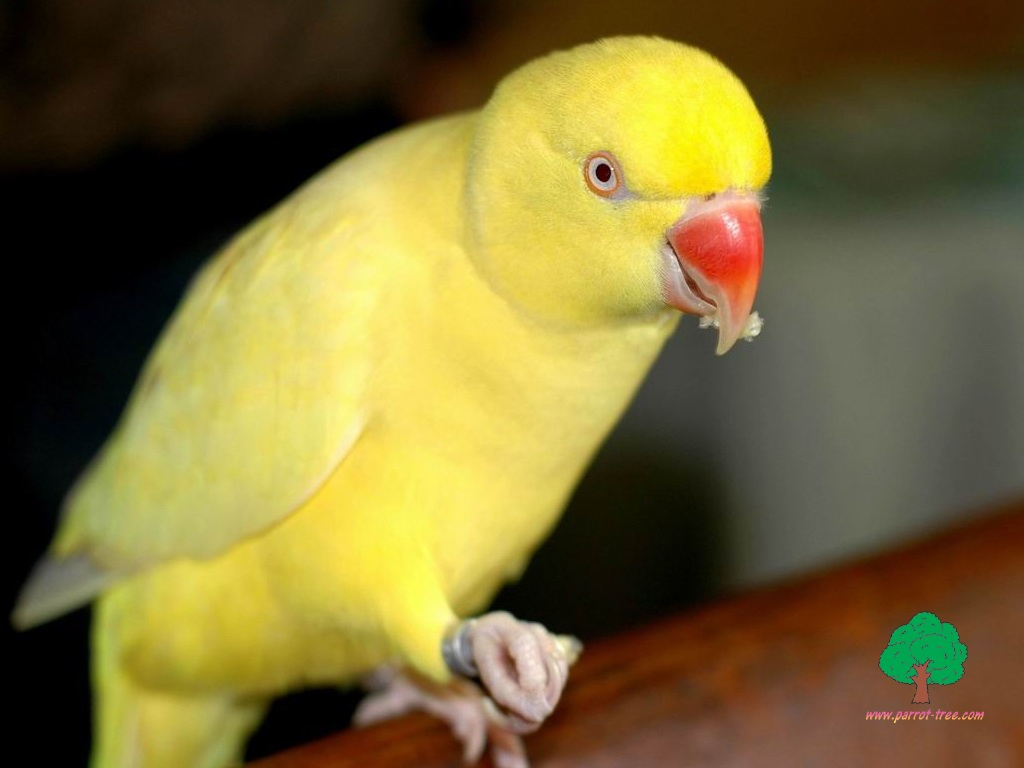 wallpapers parrot 609545 - tootazzz(mithoo)