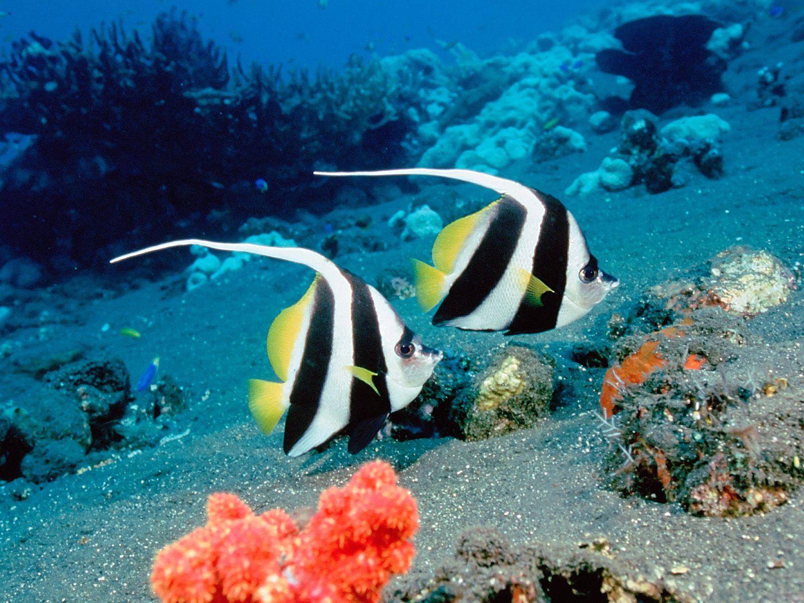 Wallpapers Underwater