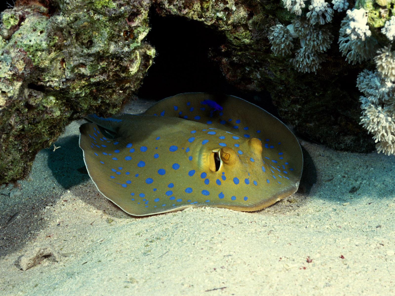 Underwater wallpapers